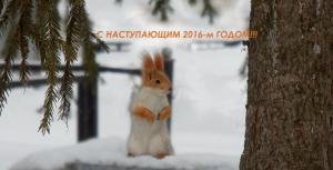 белочка, белка в Омске